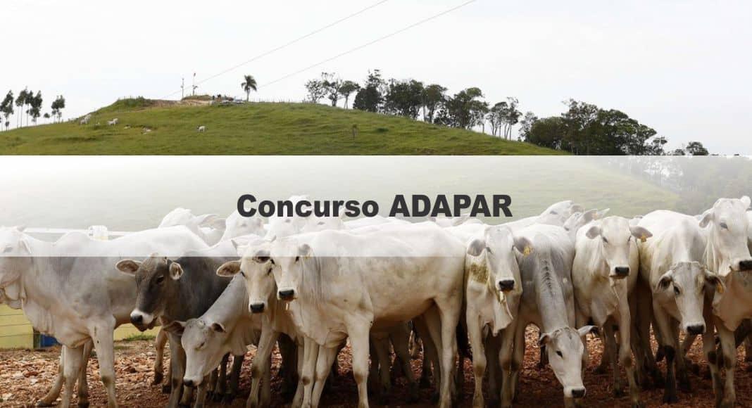 Concurso ADAPAR: Saiu o Edital com 80 vagas para nível Técnico e Superior